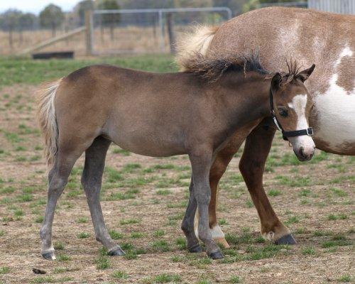 Dwarf Horse Breeders women | just b.CAUSE